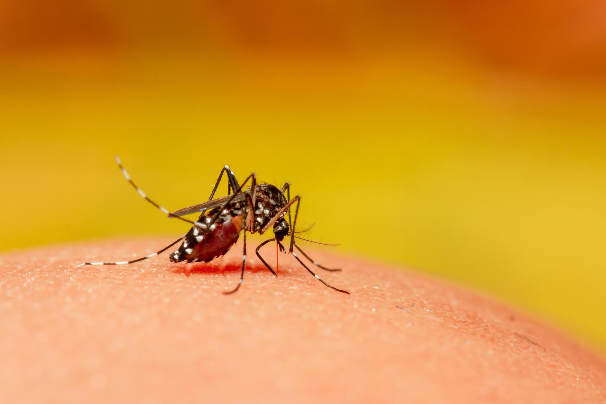 Sobe para 62 o número de casos confirmados de dengue