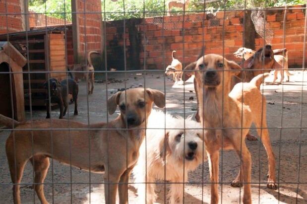 MAUS-TRATOS A ANIMAIS DOMÉSTICOS GERAM DEZENAS DE DENÚNCIAS NA OUVIDORA DA PREFEITURA